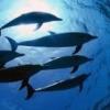 delfinoino