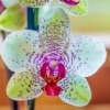 Smagliature Rosse - ultimo messaggio di orchidea75